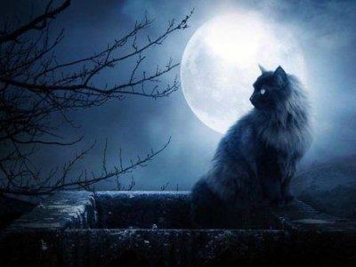 """L'histoire de """"Moche"""" le chat ?"""
