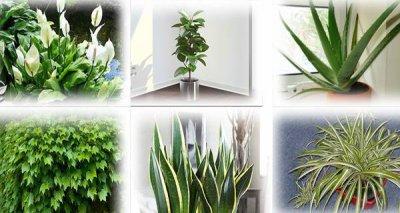 #Santé et #nature : avoir ces plantes chez vous