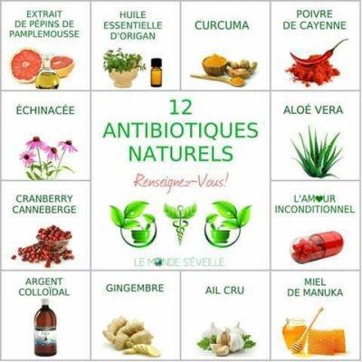 #Santé et #nature : les #antibiotiques naturel