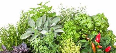 #Santé et #nature : #Plantes #médicinales