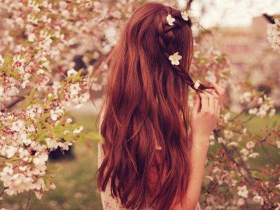 Recettes #beauté #nature pour les #cheveux : les #shampooings aux #plantes