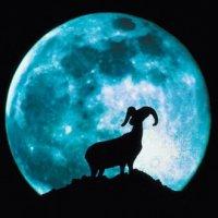 les signes #astrologique : #CAPRICORNE, #VERSEAU, #POISSON