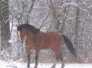 Photo de chevalstar21