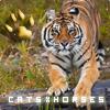 CatsxHorses