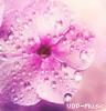 UDP-Music