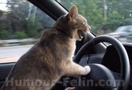 en voiture!