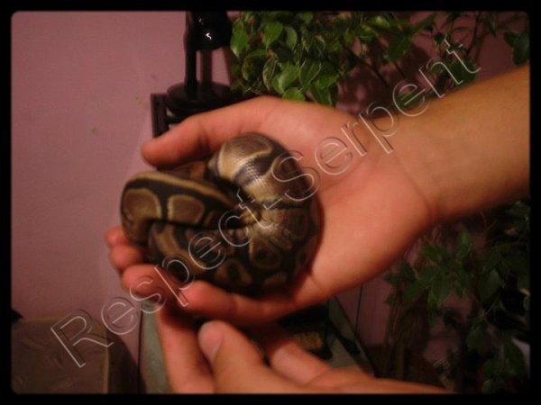 Mon Serpent   ^_^