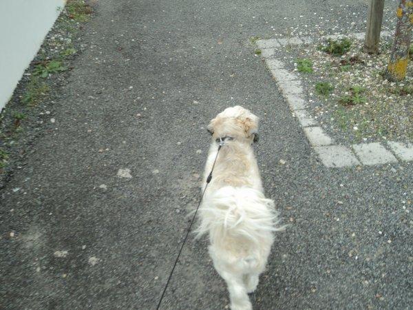 Promenade n°1