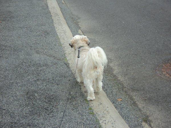 Les manies de mon chien