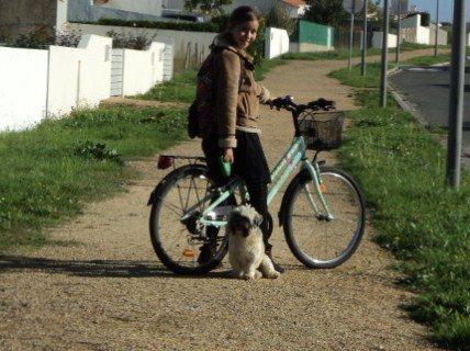 Tracto chien, le 23 novembre