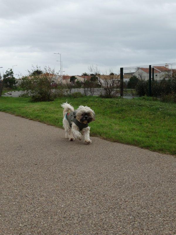 Promenade le 27 Décembre 2014