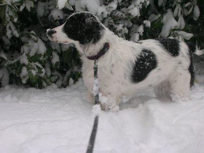 Tina dans la neige