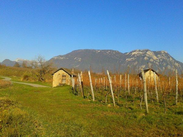 2013, le 4 décembre. Au milieu des vignobles savoyards, le lac Saint André.(1)
