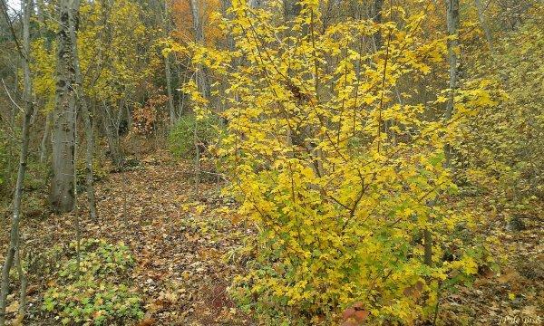 2017, le 19 novembre. Promenons-nous dans les bois...