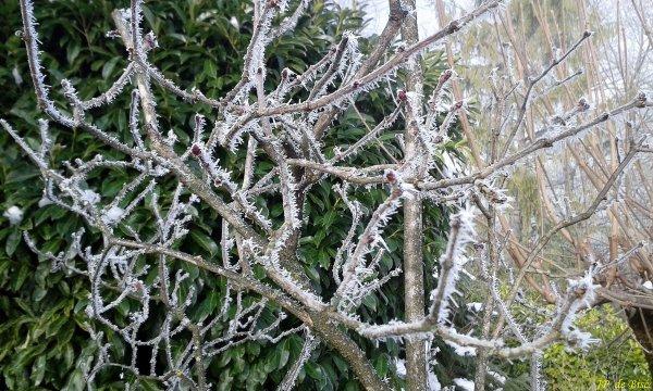 2017, le 7 décembre. Des guirlandes de gel !