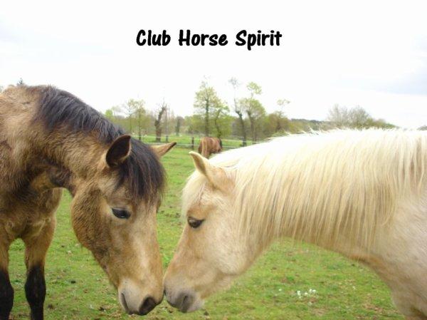 LE CLUB HORSE SPIRIT A JAMAIS !!!!!!!