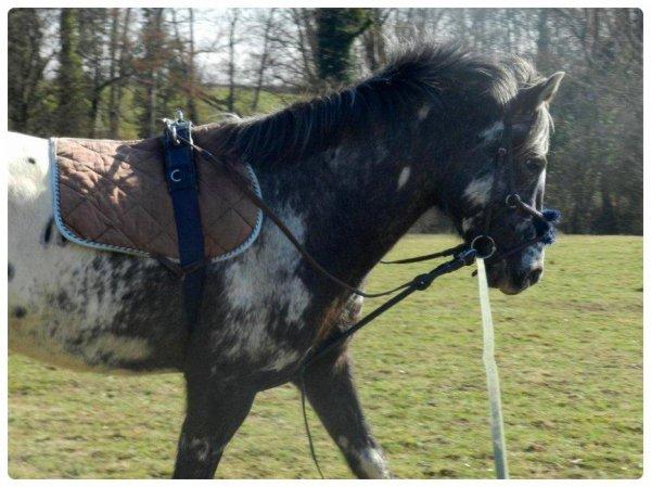Pasque mon cheval il est parfait ♥