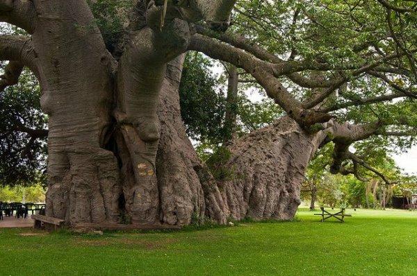 Cette arbre compte des années...