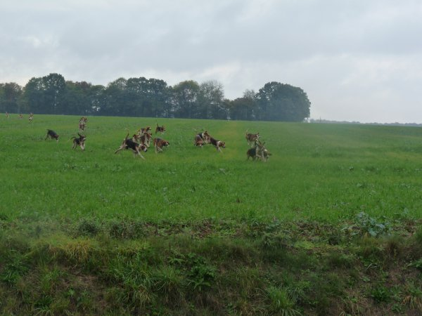 chasse a cour dui cerf le 23octobre 2010