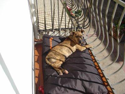 FiDJi se fait bronzer au soleil c'est devenu le commère du quartier il observe tout et écoute tout !!!!!