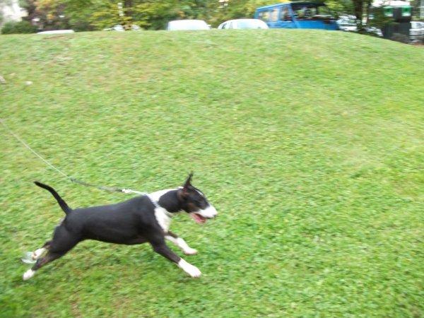 moi en promenade le 27 / 09 / 2010