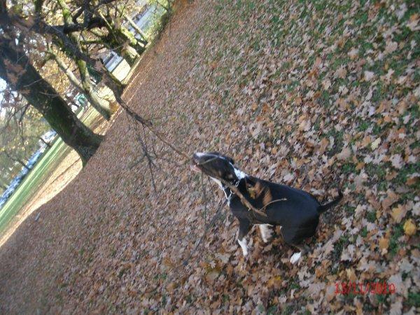 moi en promenade le 13/ 11 / 2010