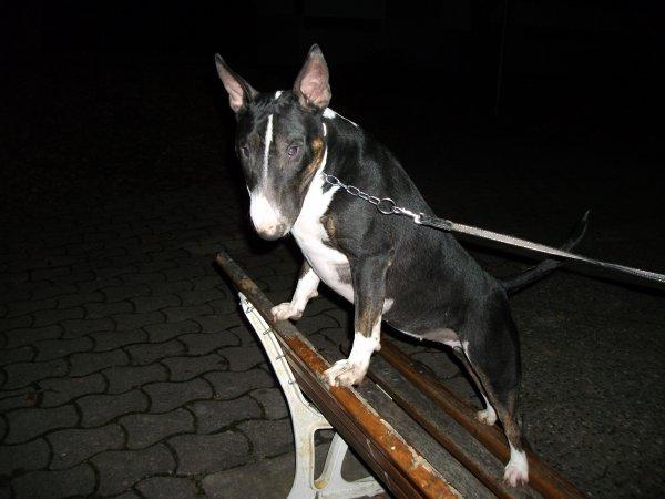 Moi en promenade de nuit le 24 / 11 / 2010