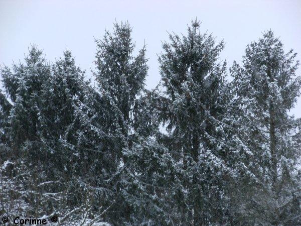 Chute de neige - Lorraine.