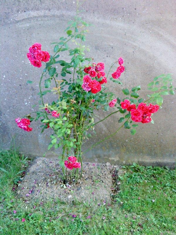 Fleurs 1.