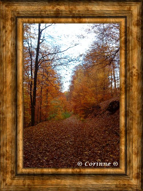 Photo souvenir automne.