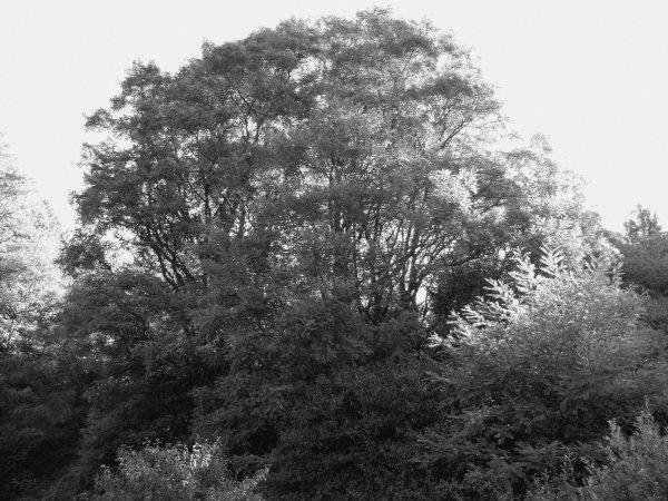 Randonnée à Willerwald (Lorraine) 2016.