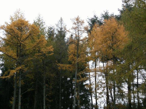 Randonnée à Neufgrange - 2016.