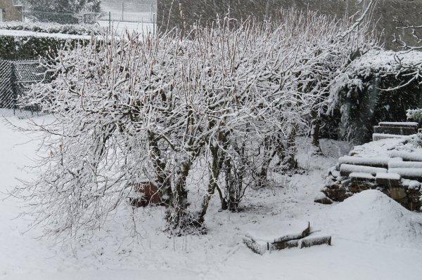 La neige - Février 2020.