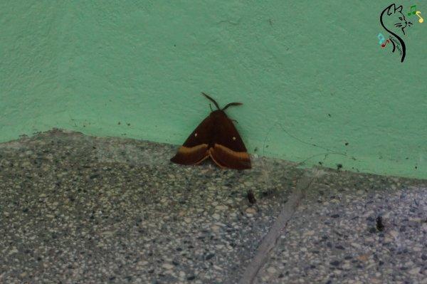 Papillon inconnu.