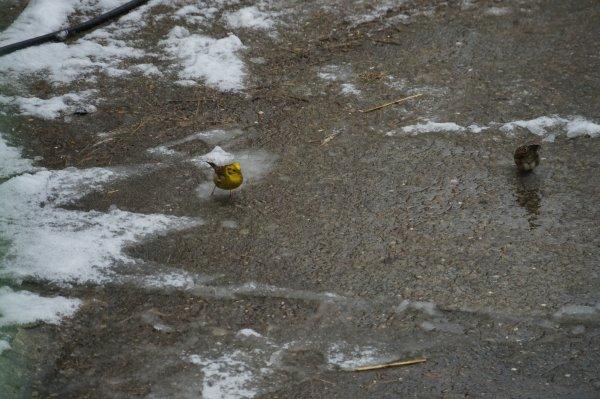 Visiteurs d'hiver (1)