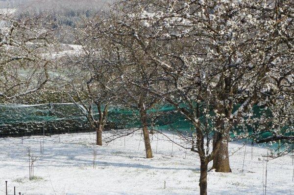 L'hiver au printemps - 2021.