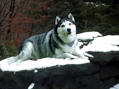 Le chien de mes rêves.