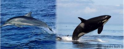 Voilà mes deux animaux marin préférés!!