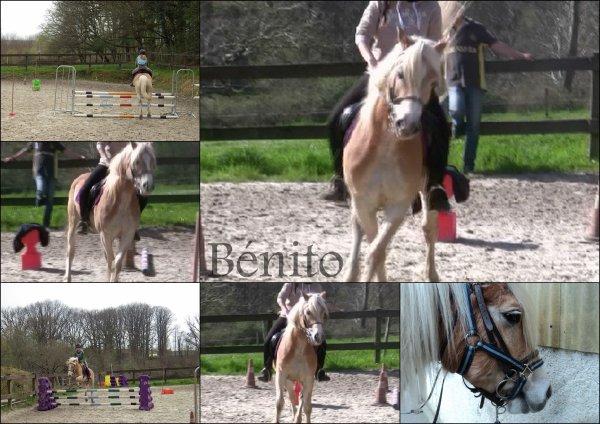 Les chevaux : L'aire du paradis