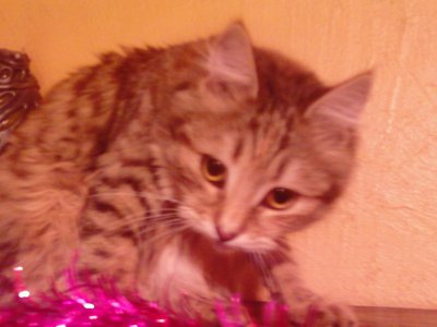 Photo.rosalie.ma ptite chatte.