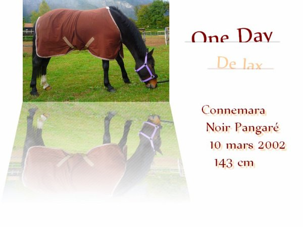One Day de Jax