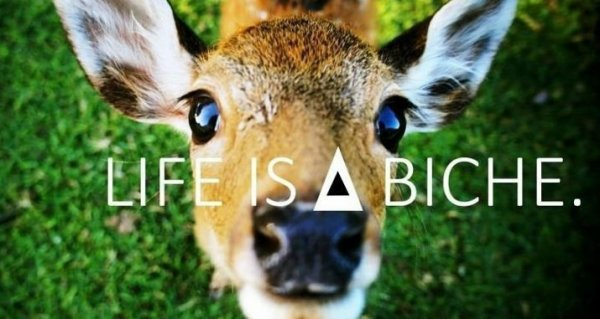 Life is a Biche.