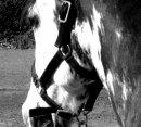 Photo de horsetouch