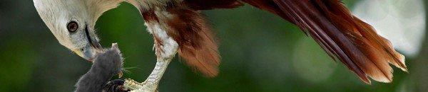 Les caractéristiques des oiseaux de proies