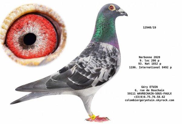 Tardifs des meilleurs pigeons à retenir