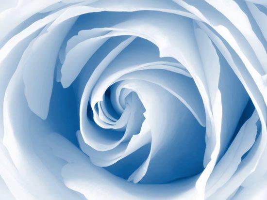 des roses pour vous mes amies s