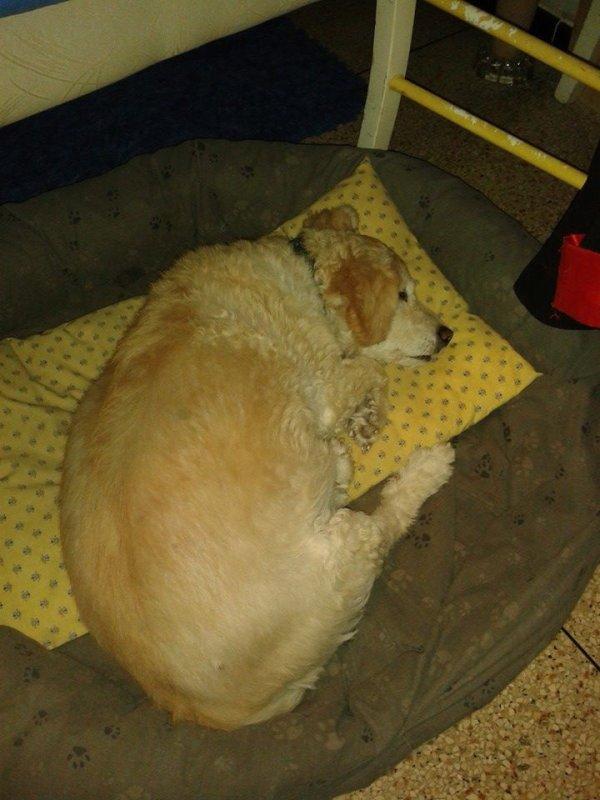 Mon chien la belle vie hier il a fais 15 ans ^^