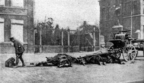 1.140.000 chevaux de l'armée française morts pendant la guerre mondiale