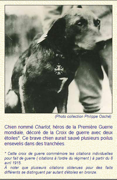 LES CHIENS DE GUERRE  1914 - 1918