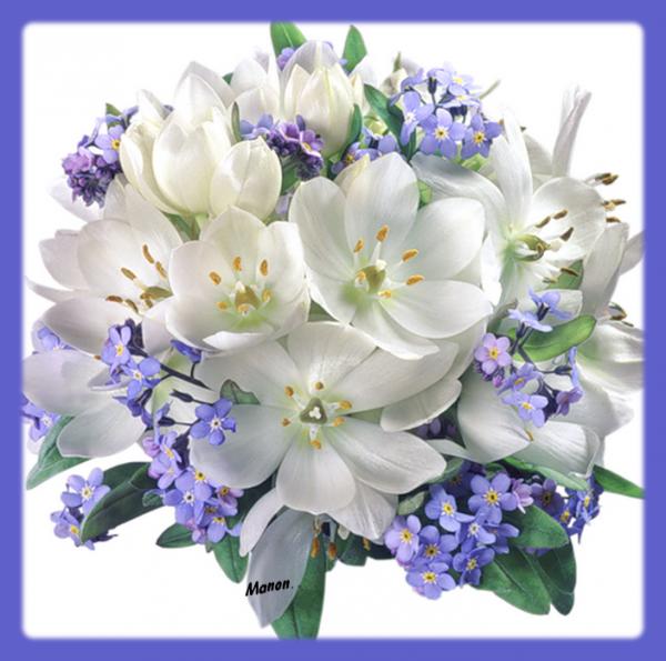 jolies fleurs de printemps !